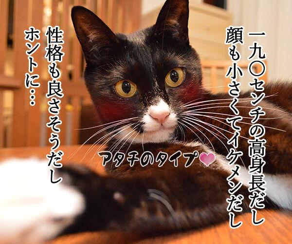 大谷翔平くんて… 猫の写真で4コマ漫画 2コマ目ッ