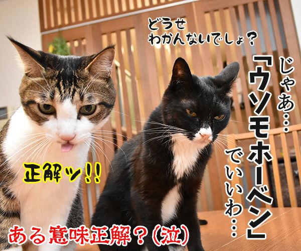 アウフヘーベン 意味は辞書で調べるのよッ 猫の写真で4コマ漫画 4コマ目ッ
