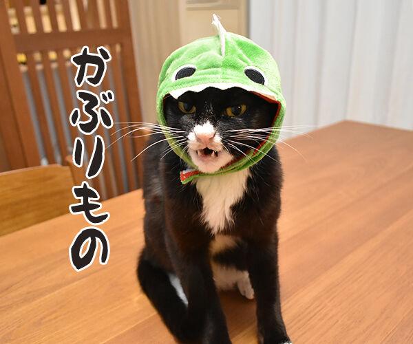 今までにした『かぶりもの』を集めてみたよッ 猫の写真で4コマ漫画 2コマ目ッ