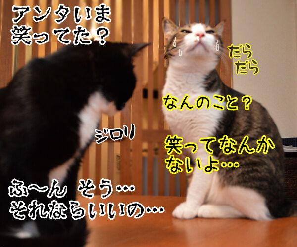 うっかりさん 猫の写真で4コマ漫画 4コマ目ッ