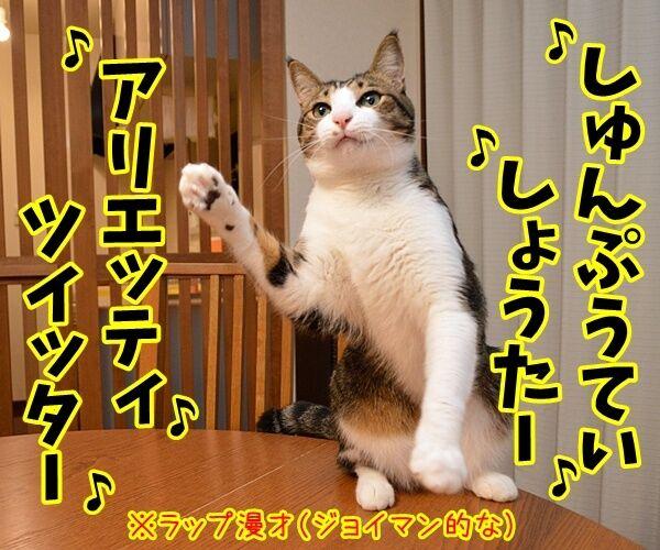 「笑点」新司会は春風亭昇太さんに決定ですってッ 猫の写真で4コマ漫画 2コマ目ッ