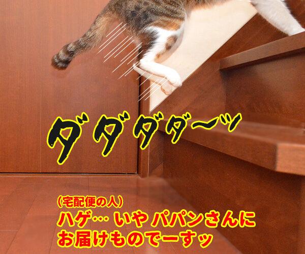 ビビリで人見知りなあずきさんは… 猫の写真で4コマ漫画 2コマ目ッ
