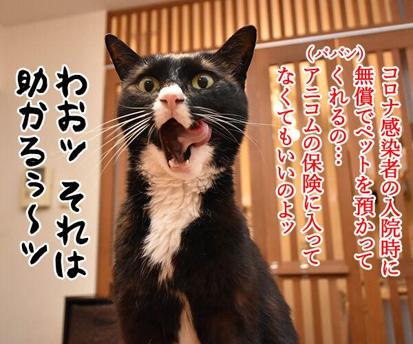 コロナ感染者のペットを無償で預かってくれるんですってッ 猫の写真で4コマ漫画 2コマ目ッ