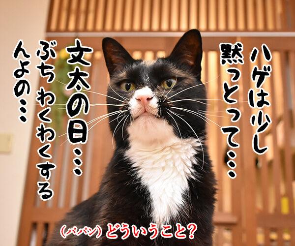 11月3日は文化の日なのよッ 猫の写真で4コマ漫画 3コマ目ッ
