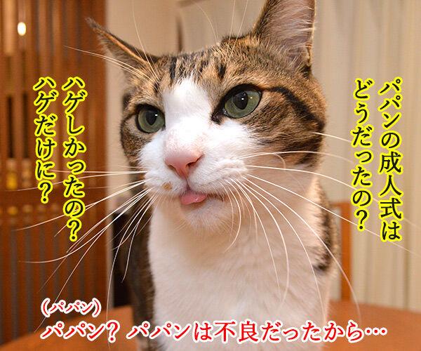 パパンの成人式は…… 猫の写真で4コマ漫画 2コマ目ッ