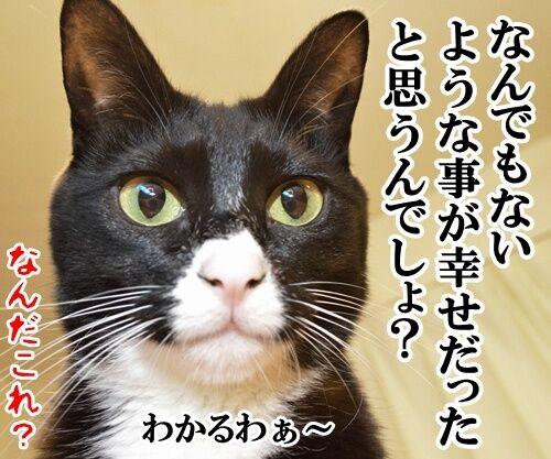 ためいきの理由 猫の写真で4コマ漫画 4コマ目ッ