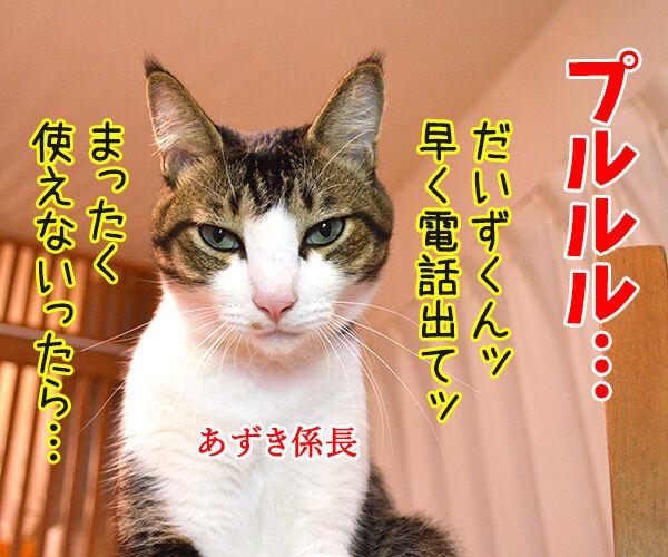 OLだいず 猫の写真で4コマ漫画 2コマ目ッ