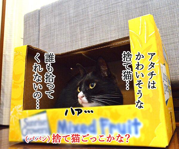 捨て猫物語 猫の写真で4コマ漫画 2コマ目ッ