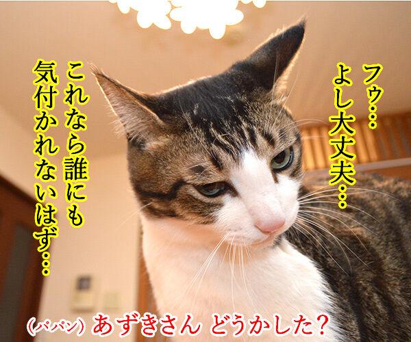 パパン、気付いてないでしょう? 猫の写真で4コマ漫画 1コマ目ッ