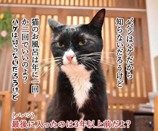 4月26日は『よい風呂の日』なんですってッ 猫の写真で4コマ漫画 2コマ目ッ