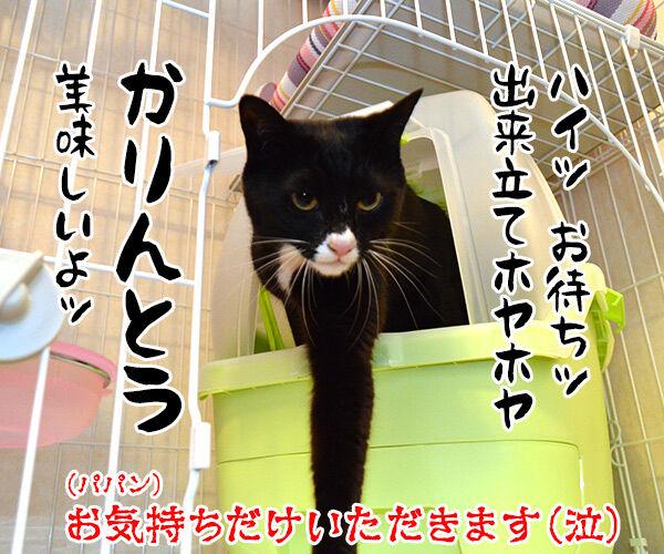 母の日のプレゼント 猫の写真で4コマ漫画 4コマ目ッ