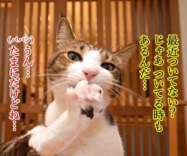 最近ついてないのよね… 猫の写真で4コマ漫画 3コマ目ッ