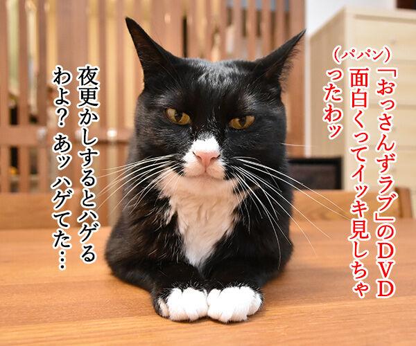 おっさんずラブのDVDをイッキ見しちゃったのよッ 猫の写真で4コマ漫画 1コマ目ッ
