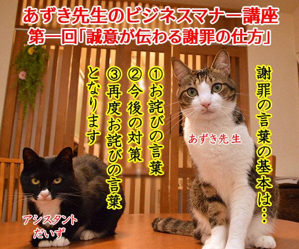 あずき先生のビジネスマナー講座「誠意が伝わる謝罪の仕方」 猫の写真で4コマ漫画 1コマ目ッ