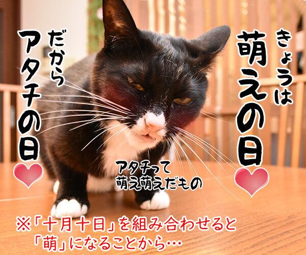 きょうは何の日? アタチの日ッ 猫の写真で4コマ漫画 3コマ目ッ