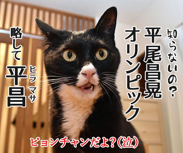 平昌オリンピックが始まったわねッ 猫の写真で4コマ漫画 4コマ目ッ