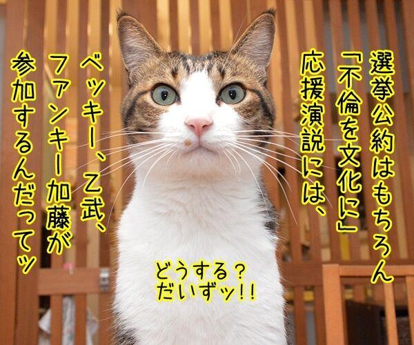 石田純一氏、東京都知事選に出馬? 猫の写真で4コマ漫画 2コマ目ッ