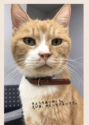 ドクターXごっこ「御意ッ」 猫の写真で4コマ漫画 5コマ目ッ