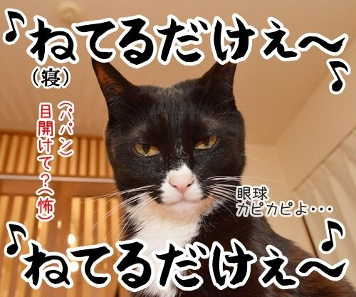 なに見てるの? 猫の写真で4コマ漫画 4コマ目ッ