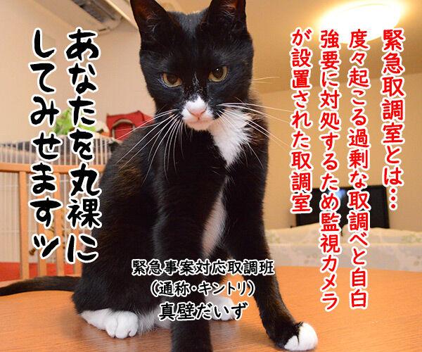 緊急取調室 猫の写真で4コマ漫画 1コマ目ッ