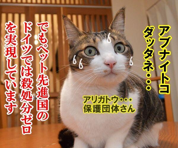 殺処分はゼロがいいわよね 猫の写真で4コマ漫画 3コマ目ッ