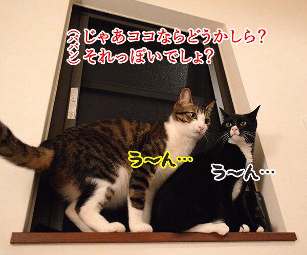 なんということでしょう? 猫の写真で4コマ漫画 2コマ目ッ
