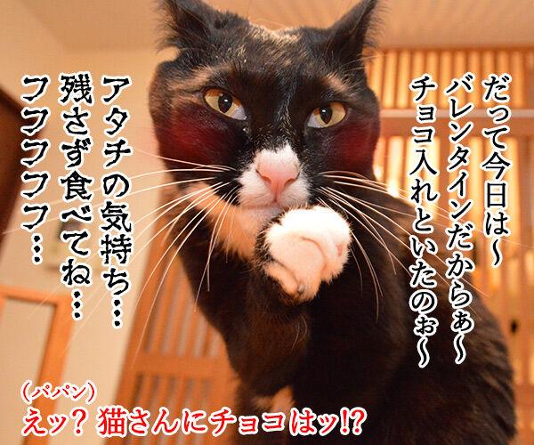 今日はバレンタインデーだから… 猫の写真で4コマ漫画 3コマ目ッ