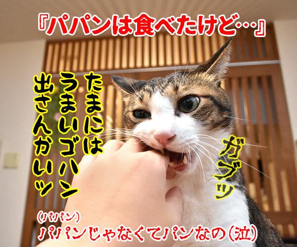 流行語大賞 ノミネート語 『ご飯論法』 猫の写真で4コマ漫画 4コマ目ッ