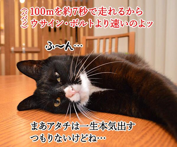 猫の足の速さは? 猫の写真で4コマ漫画 2コマ目ッ