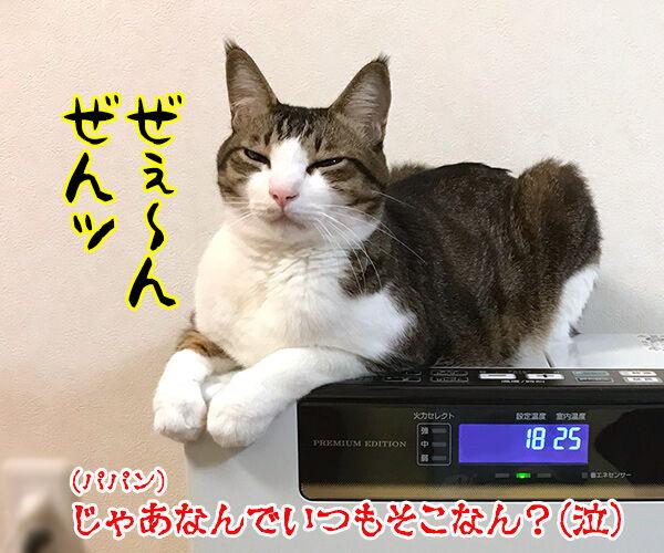 ファンヒーターのそれぞれの定位置 猫の写真で4コマ漫画 4コマ目ッ