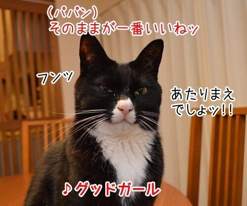 ひとりアド街コレクション 猫の写真で4コマ漫画 4コマ目ッ