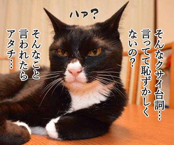 だいずが100歳まで生きるなら 猫の写真で4コマ漫画 3コマ目ッ