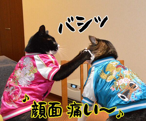 あずきとだいずのあたりまえ体操? 猫の写真で4コマ漫画 2コマ目ッ