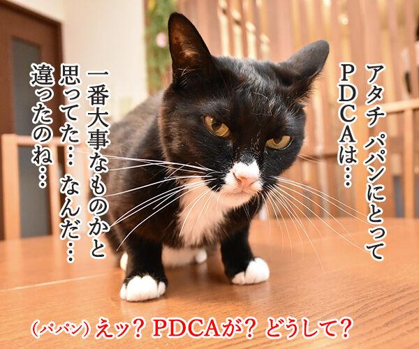 PDCAができてないって怒られたの 猫の写真で4コマ漫画 3コマ目ッ