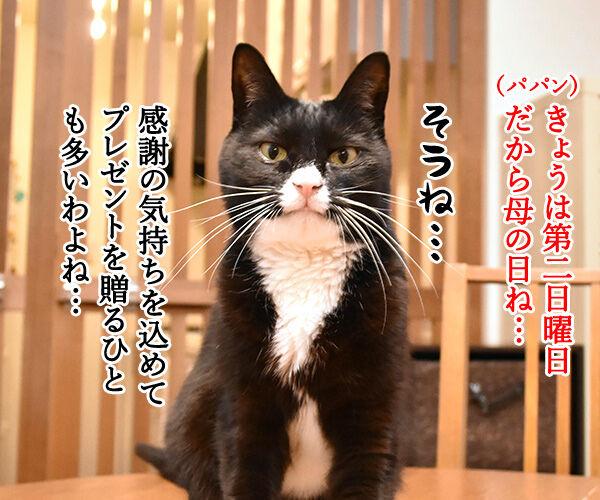 母の日のプレゼントはクロネコヤマトで 猫の写真で4コマ漫画 1コマ目ッ