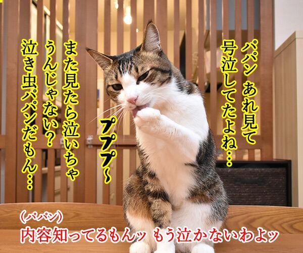 花王「ニャンとも清潔トイレ」のWEB動画が広告賞を受賞したんですってッ 猫の写真で4コマ漫画 2コマ目ッ