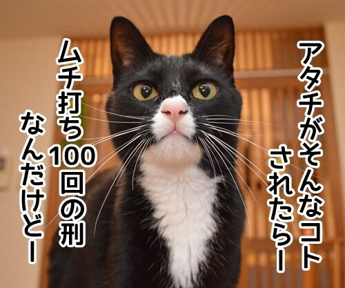 認めないオンナ 猫の写真で4コマ漫画 2コマ目ッ