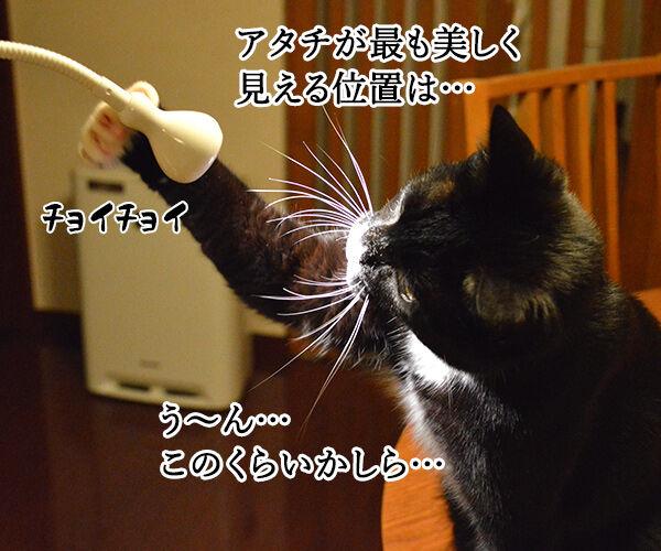 職業:女優 猫の写真で4コマ漫画 2コマ目ッ