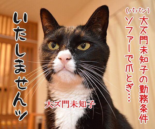 ドクターX 其の二 猫の写真で4コマ漫画 1コマ目ッ