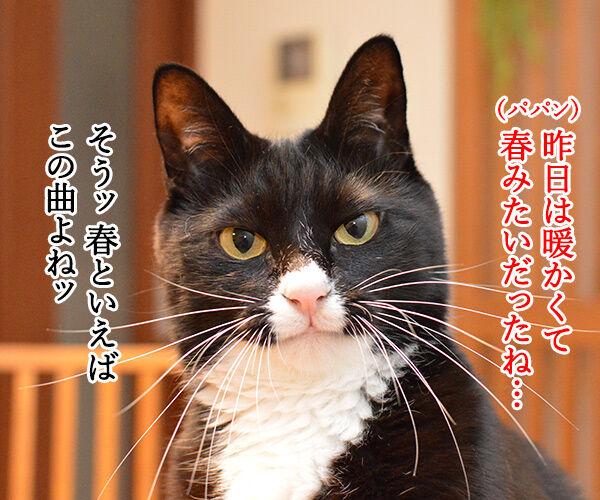 昨日は春の陽気でした 猫の写真で4コマ漫画 1コマ目ッ
