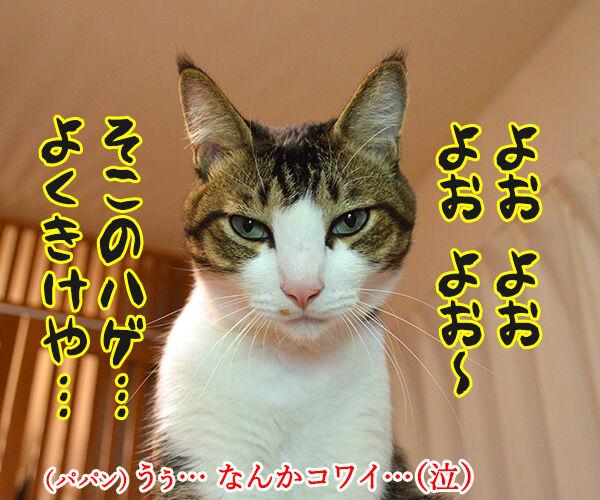 どうおとしまえつけるつもり? 猫の写真で4コマ漫画 3コマ目ッ