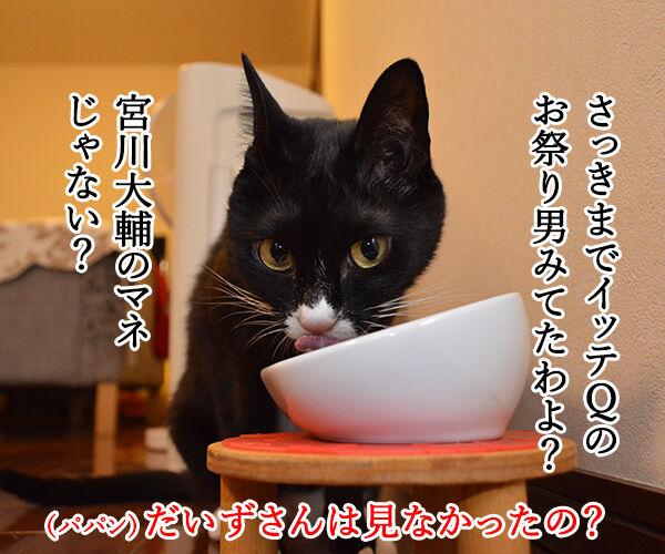 イッテQのお祭り男ってオモシロイわよねッ 猫の写真で4コマ漫画 3コマ目ッ
