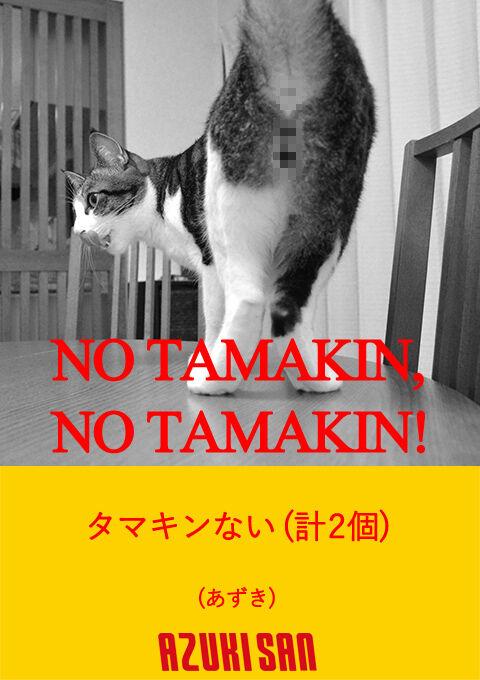 NO MUSIC, NO LIFE 猫の写真で4コマ漫画 3コマ目ッ