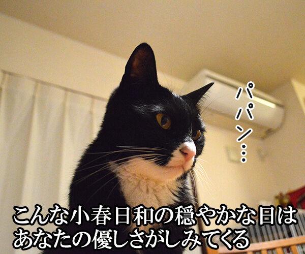 秋桜(コスモス) 猫の写真で4コマ漫画 1コマ目ッ