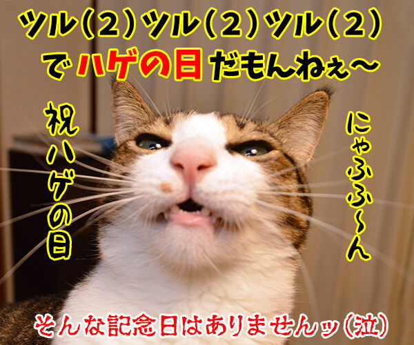 にゃんにゃんにゃんは猫の日なの 猫の写真で4コマ漫画 4コマ目ッ
