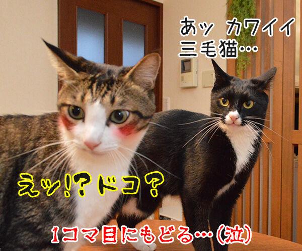 アンタってひとは 猫の写真で4コマ漫画 4コマ目ッ