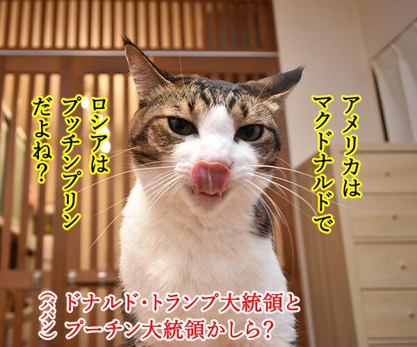 大阪で何やら開催してるらしいのよッ 猫の写真で4コマ漫画 3コマ目ッ