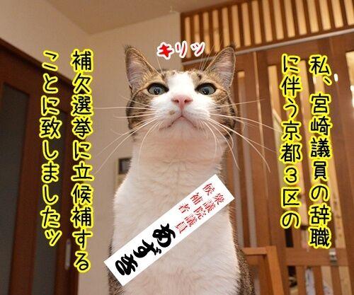 ゲス不倫議員は辞職しちゃったね 猫の写真で4コマ漫画 3コマ目ッ