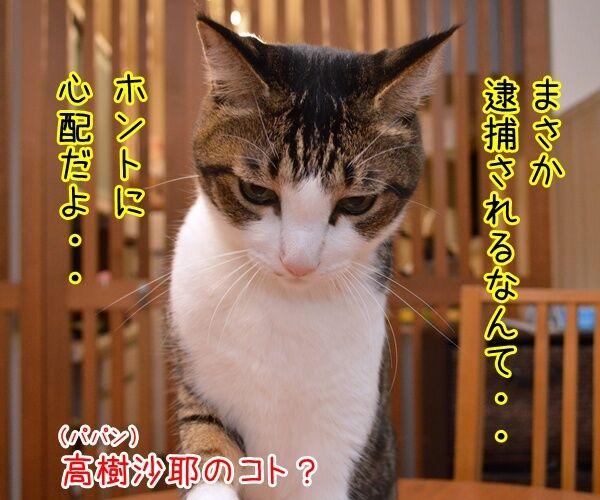 元女優・高樹沙耶が大麻所持の疑いで逮捕ですってッ 猫の写真で4コマ漫画 2コマ目ッ