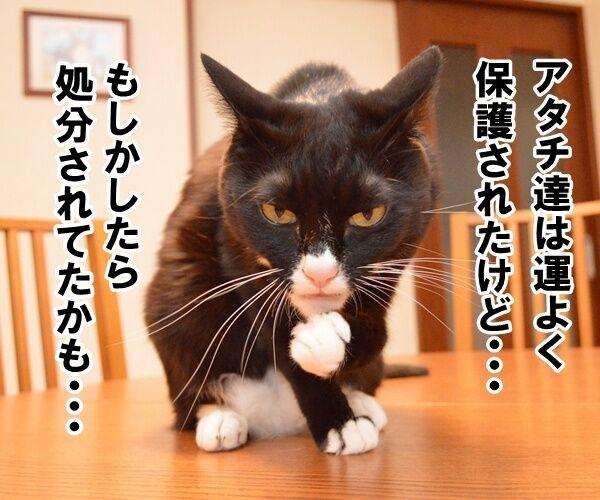殺処分はゼロがいいわよね 猫の写真で4コマ漫画 2コマ目ッ